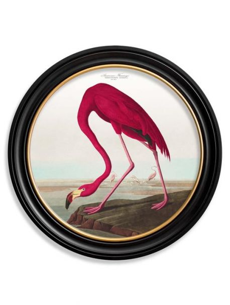 C.1838 AMERICAN FLAMINGO in Round Fame