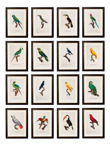 C.1800'S COLLECTION OF PARROTS Framed Prints - set of 16