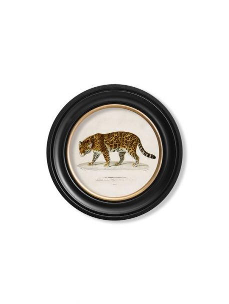 C. 1836 JAGUAR in Round Frame