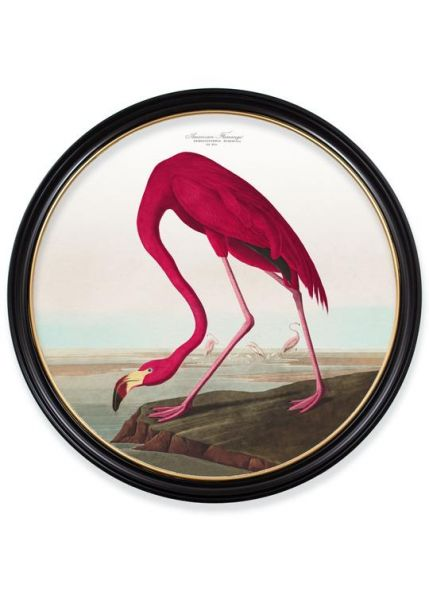 C.1838 AMERICAN FLAMINGO in XL Round Fame