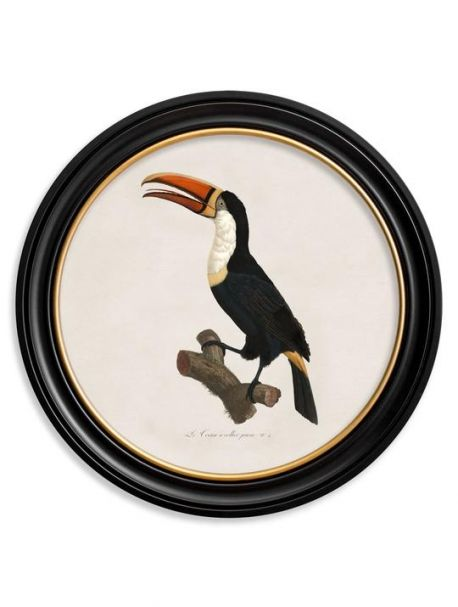 C. 1809 TOUCAN in Round Frame