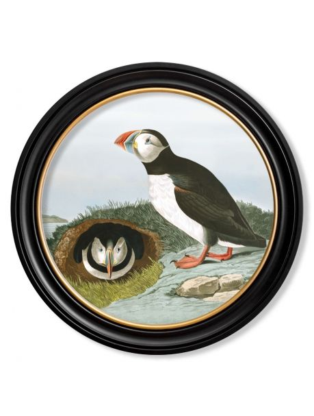 C.1838 AUDUBON'S PUFFIN in Round Frame