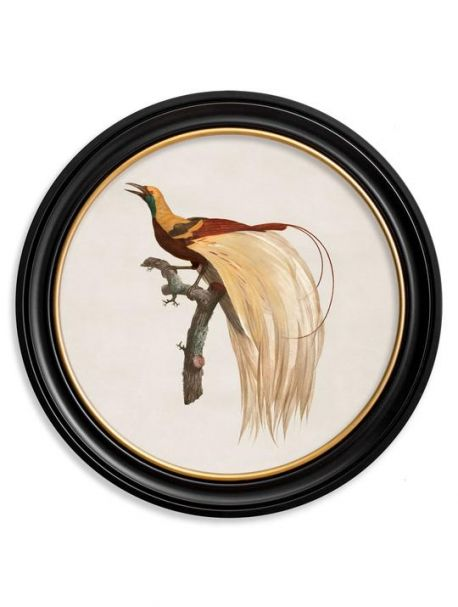 C. 1809 BIRD OF PARADISE Right in Round Frame