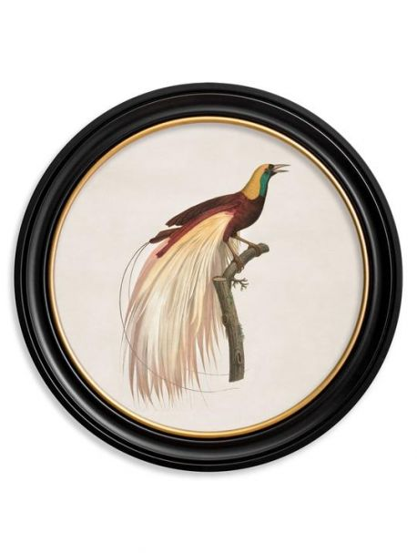 C. 1809 BIRD OF PARADISE Left in Round Frame