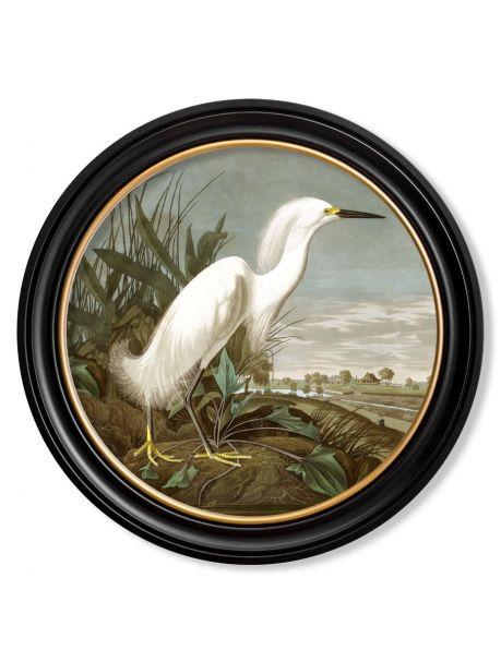 C.1838 AUDUBON'S WHITE HERON in Round Frame