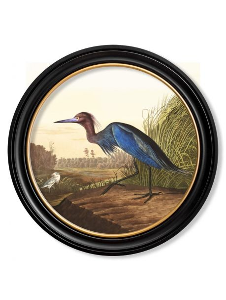 C.1838 AUDUBON'S BLUE HERON in Round Frame