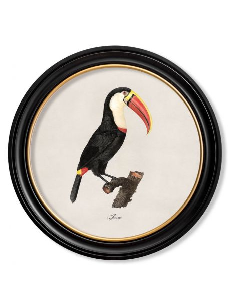 C. 1809 TOUCAN Facing Right in Round Frame
