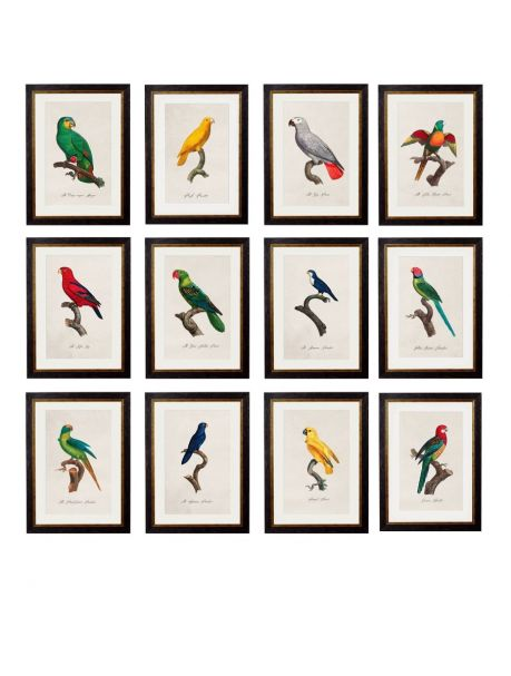 C.1800'S COLLECTION OF PARROTS Framed Prints - set of 12