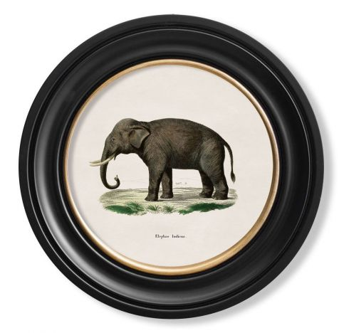 C. 1846 INDIAN ELEPHANT in Round Fame