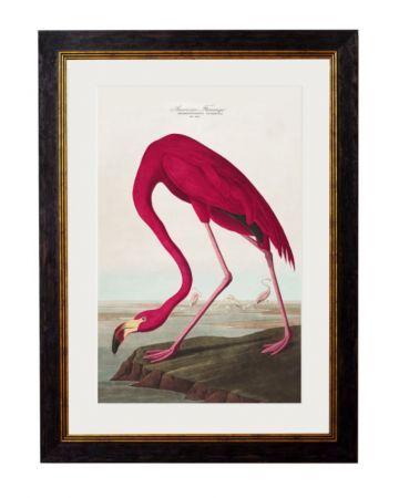 C.1838 AMERICAN FLAMINGO Framed Print